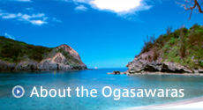 About the Ogasawaras